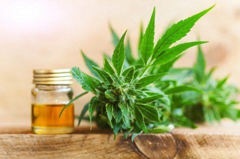 Cat de sigur si eficient este tratamentul cu ulei de canabis (CBD oil)?