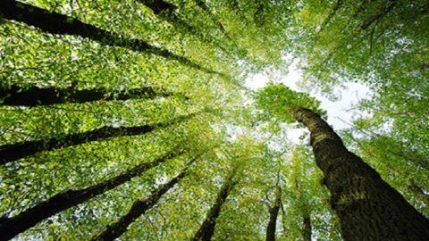 Conecteaza-te la energia copacilor prin silvoterapie