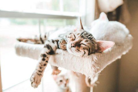 Pisica intr-un apartament: 8 sfaturi pentru a o educa si a fi fericita